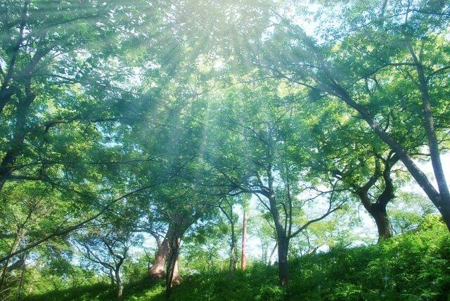 【新しいお墓】樹木葬のメリットとデメリット class=